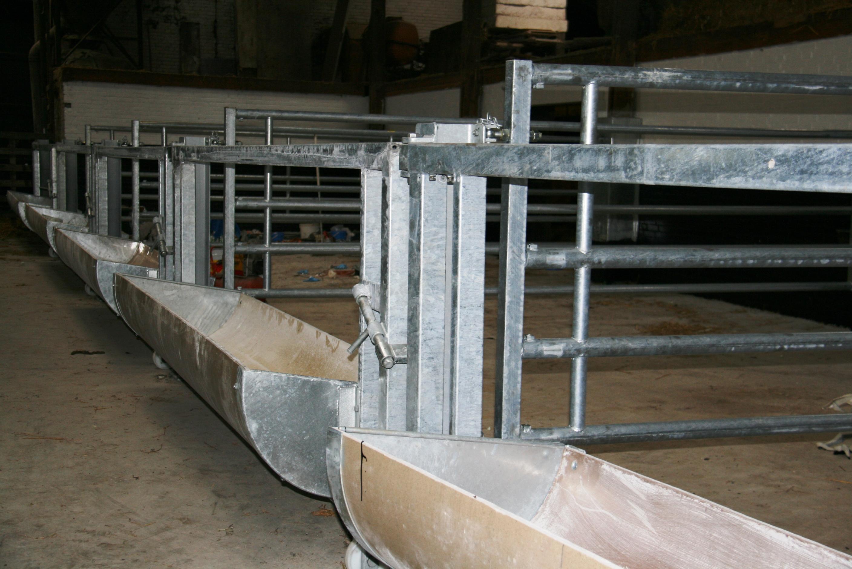 rietvelder runderen krijgen nieuwe inrichting    u2013 berg